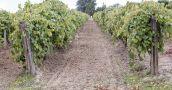 La Rioja está en el puesto 16 del ránking de exportaciones por habitante