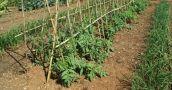 Pandemia: las cooperativas riojanas vendieron más de 10 mil kilos de alimentos